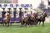 Finish line of Belmont Stakes
